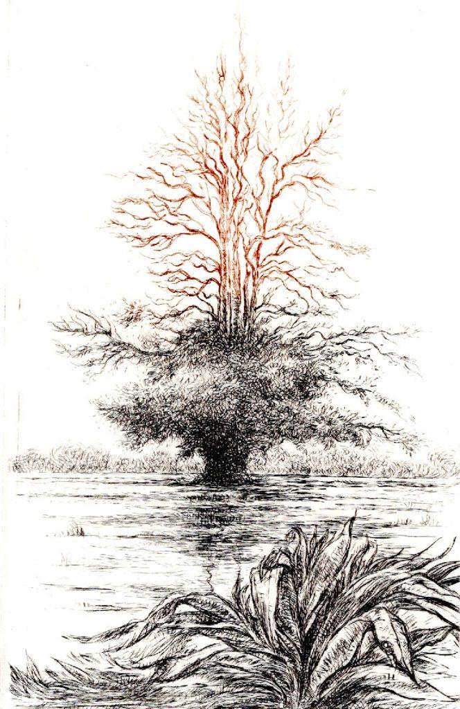 Arbre (35 x 25)